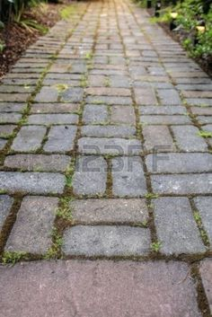LOVE THIS - Brick Pavers Garden Path with moss in landscaping