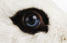 Can you work out which creatures these are from their eyes?