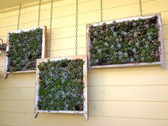 succulent gardening, California style