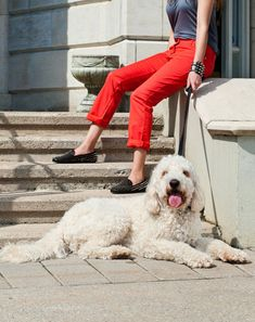Spotted: The Fashionable Pooches of PAWSH. dogster.com