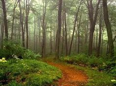 Image result for trees background