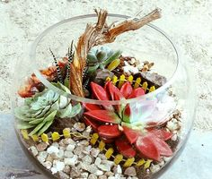 55 Best Terrarium Plants In Dubai Images Succulents Air Plants