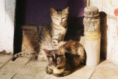 Cats in Cairo by analog photo fun, via Flickr