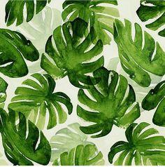 palm frauns
