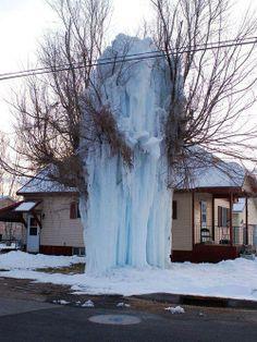 Frozen Tree, Park City, Utah
