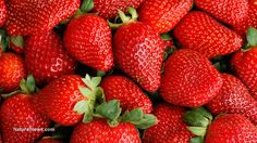 The effect of strawberries on cholesterol