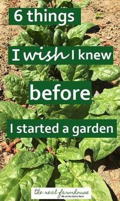 good advice when for when you're starting your first garden or just starting a new one.