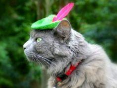 Cute pet costumes for Halloween. Robin Hood.