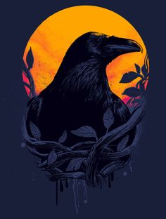 Crow or Raven Crow Art, Raven Art, Pet Raven, Raven Totem, Gravure Illustration, Illustration Art, Quoth The Raven, Arte Obscura, Jackdaw