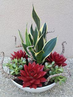 Plantas e flores - Container Garten Sukkulenten - Succulent Gardening, Succulent Terrarium, Cacti And Succulents, Planting Succulents, Garden Pots, Planting Flowers, Terrarium Ideas, Mini Cactus Garden, Fairies Garden