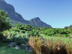 10 of the best things to do in Cape Town, South Africa including visits to Robben Island, trips up Table Mountain and shark diving (with a map). Volunteer In Africa, Places Ive Been, Places To Go, National Botanical Gardens, Stuff To Do, Things To Do, Shark Diving, Cape Town South Africa, Most Beautiful Gardens