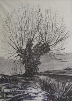 knotwilg-houtskool-tekening