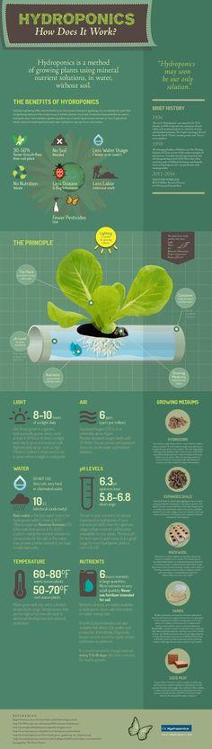 Hidroponik Untuk Pemula - HidroponiQ #hydroponicsgardening #hydroponicgardens