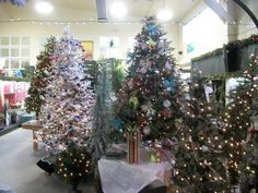 Come check out our selection for this Christmas! Christmas 2016, Christmas Tree, Hot Chocolate, Around The Worlds, Pets, Holiday Decor, Garden, Check, Home Decor