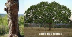 Caule tipo tronco