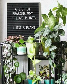 """Instead put """"There are no valid reasons to hate plants. Indoor Garden, Indoor Plants, Indoor Herbs, Planting Succulents, Planting Flowers, Plants Quotes, Plant Aesthetic, Plants Are Friends, Green Life"""