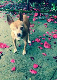Cutie! Pink Petals, Rose Petals