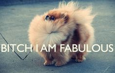 this is me. in pomeranian form.