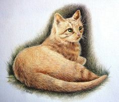 """Gattino"", illustrazione ad acquerello e matite colorate."