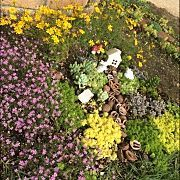 Entrance,ナチュラル,植物,ガーデニング,ガーデン,多肉植物に関連する他の写真