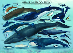 EuroGraphics Whales and Dolphins 1000-Piece Puzzle. These fascinating underwater mammals include the bottlenose and hourglass dolphins and the humpback, orca killer and blue whales.