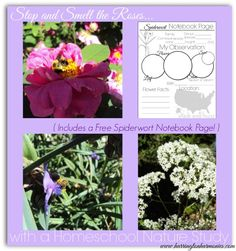 Free notebook page for spiderwort