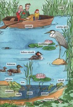 Картинки по запросу vizek élővilága feladatlap