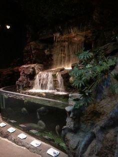 Beautiful rainforest feature at the aquarium
