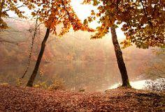 Beautiful autumn photos Bundle by JustShop on Creative Market