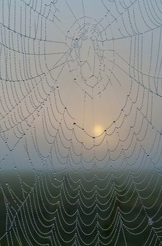 painting-a-picture: Pretty :) Spider Silk, Spider Art, Spider Webs, Samhain, Foto Macro, Amazing Spider, Beautiful World, Mother Nature, Nature Photography