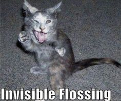 DOGS DOING FUNNY THING | funny cats doing invisible things picture gallery cute fun pic funny ...