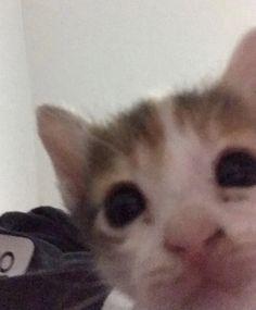 Cute Baby Cats, Cute Funny Animals, Cute Baby Animals, Funny Cats, Cute Babies, Cat Icon, Cat Aesthetic, Tier Fotos, Cute Creatures