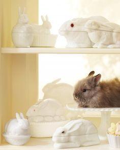 OK...look at that darling bunny!