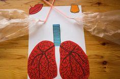 Jak fungují plíce při nádechu - Blog - Zneznáma Blog, Blogging