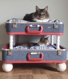 Cat duplex - made from a recycled suitcase.