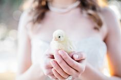 chicks are the new bouquets dontcha know ;) photo by Lora Grady Photography | Bridal Musings