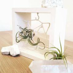 I've started these little #airplant wooden dreamcatchers. They seem really happy in them 😊💚 Plant Shelves, Little Boxes, Air Plants, Floating Nightstand, Dream Catcher, Crystals, Handmade Gifts, Etsy, Happy