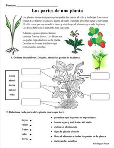 Plants/plantas - The Learning Patio Plant Lessons, Science Lessons, Science Activities, Spanish Teaching Resources, Spanish Lessons, First Grade Classroom, Spanish Classroom, Classroom Ideas, Plant Science