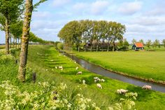 https://flic.kr/p/eNvimh | Landscape in de Beemster (Unesco World heritage) | Buy this photo on Getty Images : Getty Images The Beemster is the first so-called polder in the Netherlands that was reclaimed from a lake, the water being extracted out of the lake by windmills. The Beemster Polder was dried during the period 1609 through 1612. It has preserved intact its well-ordered landscape of fields, roads, canals, dykes and settlements, laid out in accordance with classical and…