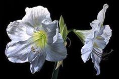acrylic flowers - Buscar con Google
