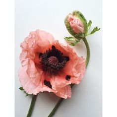 Not sure I will ever recover from this poppy.