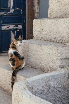 Greek cat in Santorini I Love Cats, Big Cats, Cats And Kittens, Cute Cats, La Provence France, Cat City, F2 Savannah Cat, Cat Boarding, Ginger Cats