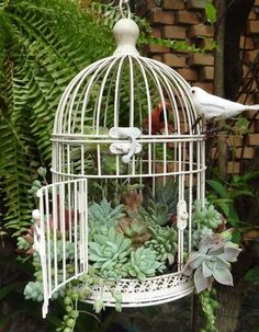 10 idées de composition florale avec des succulentes, plantes grasses et cactus - Esprit Laïta Succulentes dans cage à oiseaux - 10 Ideen für Kompositionen mit Sukkulenten, Pflanzen, Gräsern und Kakteen - Esprit Laïta Birdcage Planter, Garden Projects, Plants, Succulents, Succulent Gardening, Fairy Garden, Outdoor Gardens, Container Gardening, Bird Cage Decor