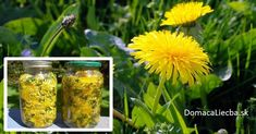 How to Prepare Dandelion Tea and Syrup and Treat Cancer, Hepatitis, Liver, Kidneys and So Much More! Detox Your Liver, Liver Detox Cleanse, Body Detox, Body Cleanse, Kidney Cancer, Cancer Cure, Digestive Detox, Healthy Liver, Liver Detox