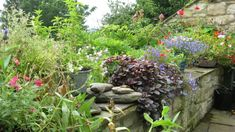 Ruth's Garden: Playing Wildflower Roulette - Gardenista