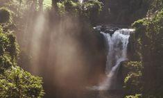 A natureza magnífica de Bali ... Cuyana   Bali Nature
