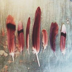 'Let me be as a feather. Strong with purpose. Yet light at heart. Able to bend. And though I might become frayed. Able to pull myself together again'  Anais Nin