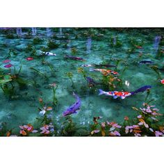 Instagramで話題!日本の「名前もない池」がモネの池そのもの♡ - Locari(ロカリ)