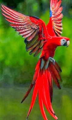 Parrot+red+bird+Bokeh.jpg (384×640)