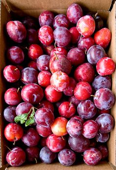 We had two plum trees in our yard growing up, we would pick the fruit right off the tree and eat it, so juicy. Fruit And Veg, Fruits And Vegetables, Fresh Fruit, Gm Diet, Red Plum, Beautiful Fruits, Delicious Fruit, Delicious Recipes, Tasty